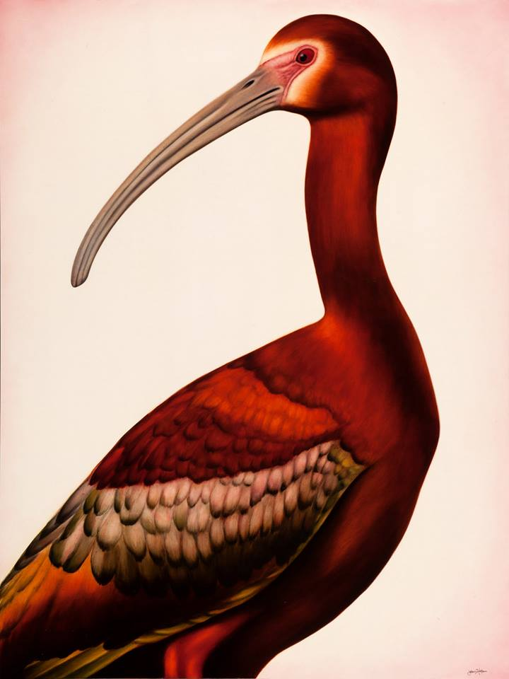 ibis-jason-horton-artist