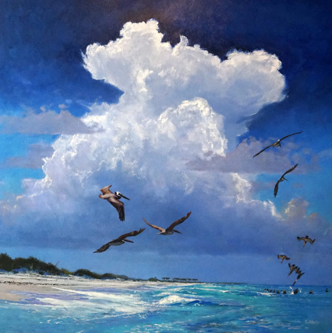 Diving Pelicans, Horn Island 48x48
